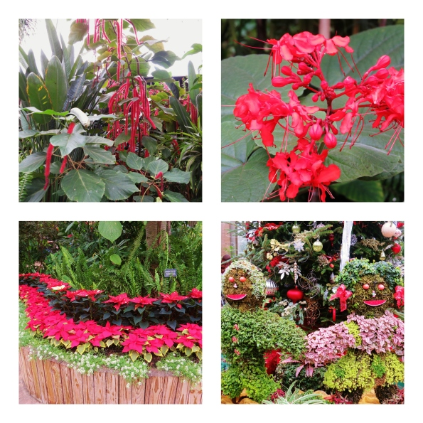 Christmas, Callaway Gardens, horticultural, Poinsettias, chenille plant, topiary,