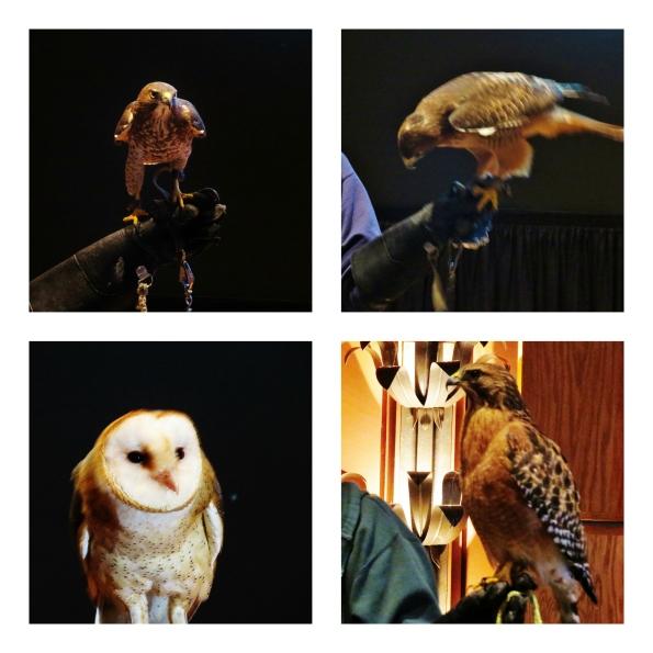 Raptors, Callaway Gardens, birds, birds of prey, hawks, owl
