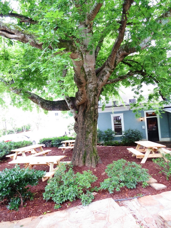 you can have lunch under this gorgeous tree