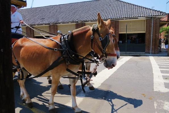 Carriage tours in Charleston
